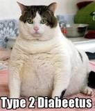 th_catdiabetes.jpg