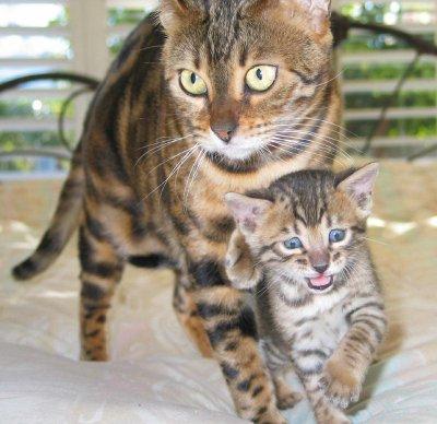 kitten-pictures-69.jpg